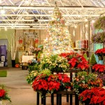 Christmas Greenhouse Showroom